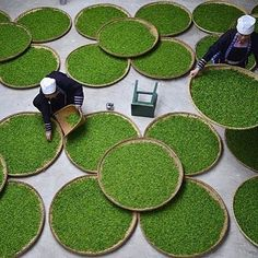 """Did you know that the English word """"tea"""" comes from the Amoy (Xiamen) dialects word """"te""""? Cup of green anyone? #China #LearnChinese #Mandarin #LearnMandarin #Fact : @thechairmansbao"""