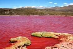 Laguna Roja: The Enigmatic Red Lagoon In Chile Ecuador, Travel Around The World, Around The Worlds, Bolivia Travel, Great Hotel, Exotic Places, Beautiful Places In The World, Amazing Nature, South America