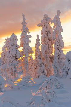 #Winter #Snow #Seasons