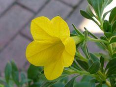 Flower (Yellow)