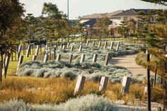 Saltwater Coast. Landscape architecture: Tract Consultants / Planting is layered and massed, using indigenous species.