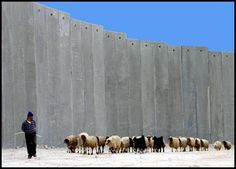 Palestine, the wall