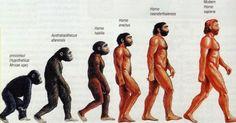 Cinco equívocos que se afirma sobre a teoria da evolução