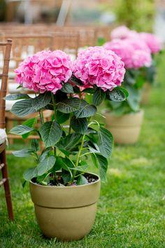 Pink hydrangeas make perfect aisle decor for a garden wedding ceremony! photo by Jonathan Young Weddings | via junebugweddings.com