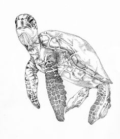 Animal Art, Animal Drawings, Illustration, Art Drawings, Animal Sketches, Mermaid Painting, Sea Turtle Art, Art Sketches, Ocean Art