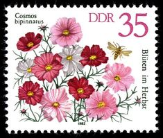 File:Stamps of Germany Cosmos Cosmos, Postage Stamp Design, German Stamps, Art Postal, Going Postal, Flower Stamp, Vintage Stamps, Tampons, Penny Black