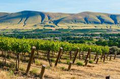 Red Mountain AVA, Washington State.  Sean Sullivan - Washington Wine Report: February Pic of the Vine