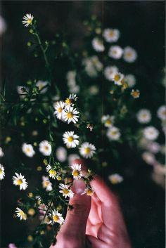 daisies || flower power