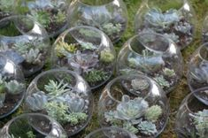 How to make your own succulent terrarium centerpieces   Offbeat Bride [g> well in advance, add hanger flower white]