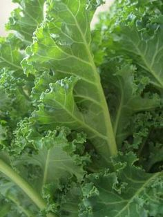 Kale, everything you need to grow it well!