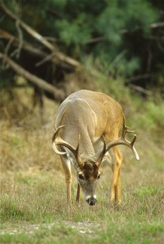 7 Deer hunting scent control tips