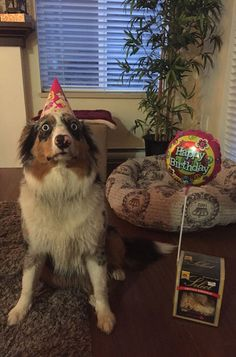 My Dog is Horrified That It's Her Birthday.