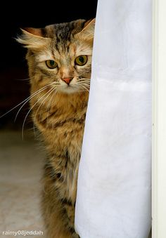 http://cybergata.tumblr.com/post/80832249424/cool-neda-hiding-by-raimy-sofyan-on-flickr http://cybergata.tumblr.com/