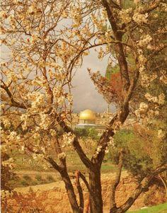 Palestine...Al Quds