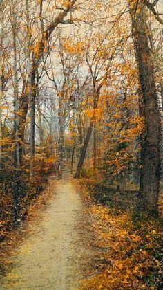 A Walk in November (Haddonfield, New Jersey) by John Rivera on 500px