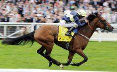 Nathaniel Cavallo da corsa di razza purosangue inglese, campione nel Regno Unito nato il 24 aprile 2008. Generato da Galileo eMagnificient Style. Di propr