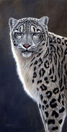 Красивые Кошки, Милые Животные, Я Люблю Кошек, Большие Кошки, Снежный Барс, Изображение Дикой Прироты, Хмурый Кот, Бездомные Коты, Котопес