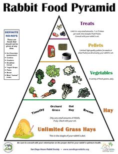 House Rabbit Society recommends a limited pellet diet for rabbits. Pellets should be the smallest part of a healthy rabbit's diet. The Rabbit Food Pyramid (pdf) is a good visual representatio… Pet Bunny Rabbits, Dwarf Bunnies, Meat Rabbits, Raising Rabbits, What To Feed Rabbits, Vegetables For Rabbits, Bunny Cages, Rabbit Cages, House Rabbit