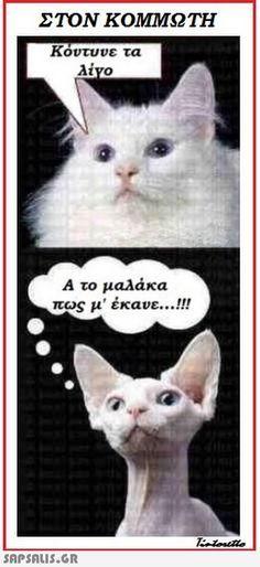Αστεία ανέκδοτα, Αστεία video, Αστειες εικονες και Ατακες Greek Memes, Funny Greek Quotes, Funny Animal Memes, Funny Animals, Baby Cats, Funny Images, More Fun, Best Quotes, Cat Lovers