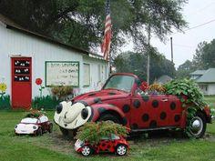 Lady bug flower garden vw beetle