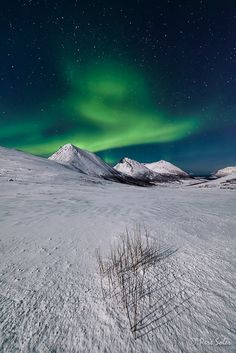 The Green Lady,  Tromso,Norway