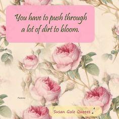 Bloom, Quotes, Rose, Garden, Quotations, Pink, Garten, Lawn And Garden, Gardens