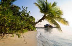 5 Star LUX* Maldives Resort (Video)