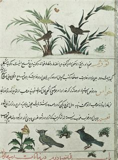 Persian Birds and Flowers Graphic