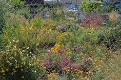 East Bay Wilds Native Plant Nursery 510-409-5858