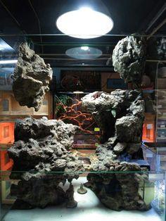 17 Best images about Aquariums vivariums Paludariums Water Terrarium, Gecko Terrarium, Reptile Terrarium, Garden Terrarium, Reptile Zoo, Reptile Cage, Reptile Enclosure, Reptiles, Amphibians