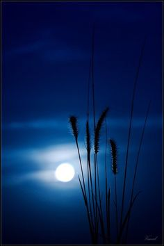 Moon and night skies blue @ Deedidit. Foto Picture, Ciel Nocturne, Shoot The Moon, Moon Pictures, Beautiful Moon, Beautiful Scenery, Beautiful Landscapes, All Nature, Blue Moon