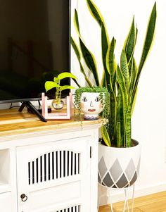 58 Best Indoor Plants To Purify The Air In Your Home,types of indoor plants,small indoor plants,best indoor plants Small Indoor Plants, Hanging Plants, Home, Ad Home, Homes, Houses, Haus