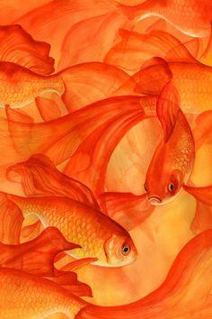 orange goldfish print.