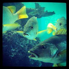 Oceanario 02 - Islas del Rosario #Colombia