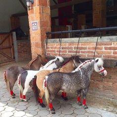 Любовь Лошадей, Красивые Лошади, Милые Детеныши Животных, Миниатюрные Лошади, Конюшни, Конюшни, Смешные Лошади