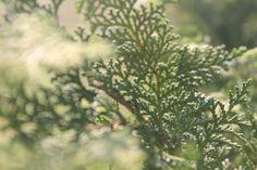 Worldgreen
