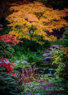 Arboretum Fall Color - October colors in the Washington Park Arboretum in Seattle, Washington.