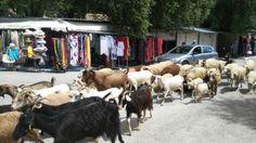 Goat walk through Palao, Corfu