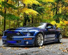 Ford Mustang Shelby likes · talking about this. The best of Ford Mustang ! It's not just a car – it's a passion. Ford Mustang Shelby Cobra, Mustang Girl, Ford Shelby, Car Ford, Ford Gt, Slammed Cars, Modern Muscle Cars, Cool Sports Cars, Pony Car