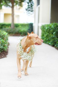 Floral Dog Wedding Wreath | Pretty Fluffy Awwww!!!! Must do this when we finally have a real wedding :-) <3