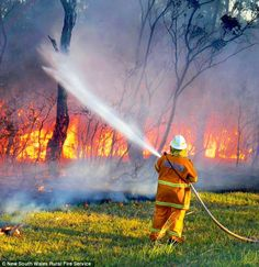 Australian firefighters in desperate battle to stop bush blazes reaching military range of unexploded bombs near Lithgow. Australian Plants, Australian Bush, Australian Animals, Bird People, Art Terms, Unsung Hero, Volunteer Firefighter, Ancient Aliens, Natural Disasters