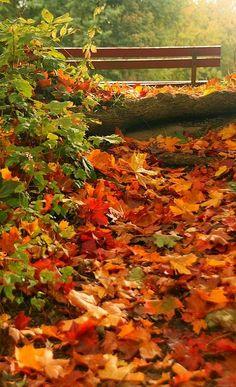 autumn leaves... Schwanensee-Park in Kiel, Germany | by life's observer