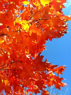 #Fall red leaves
