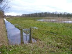 2014-02-09 Natuurgebied Hagenbeek nabij Barchem is een verrassend waterrijk gebied met laarzenpad