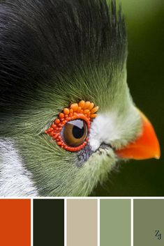 Although this bird's eye is going to give me nightmares, I love the colors here. A very different kind of palette. Nature Color Palette, Colour Pallette, Colour Schemes, Color Patterns, Color Combos, Green Colour Palette, Orange Palette, Green Colors, Color Harmony
