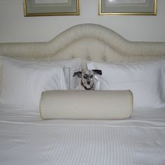 The Carlisle in New York - a pet-friendly hotel