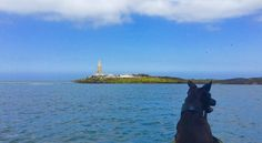Zach looking for seals.   Ynys Dulas as backdrop