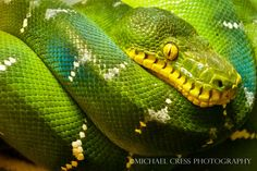 Snakes- I Hate Snakes!  ... but the beauty is there.