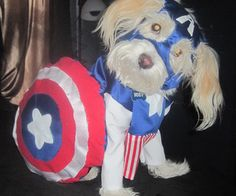 Dog Costumes: Adorable, fun dog costumes for you to dress your pooch in this Halloween. If you've got a puppy patient enough to be dressed in funny costumes, then you've come to the right place! Check out these zany projects to deck out yo. Diy Superhero Costume, Pet Halloween Costumes, Pet Costumes, Dog Halloween, Happy Halloween, Cute Animal Pictures, Funny Animal Pictures, Funny Dogs, Cute Dogs