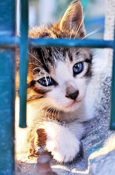 Cats - Catzen